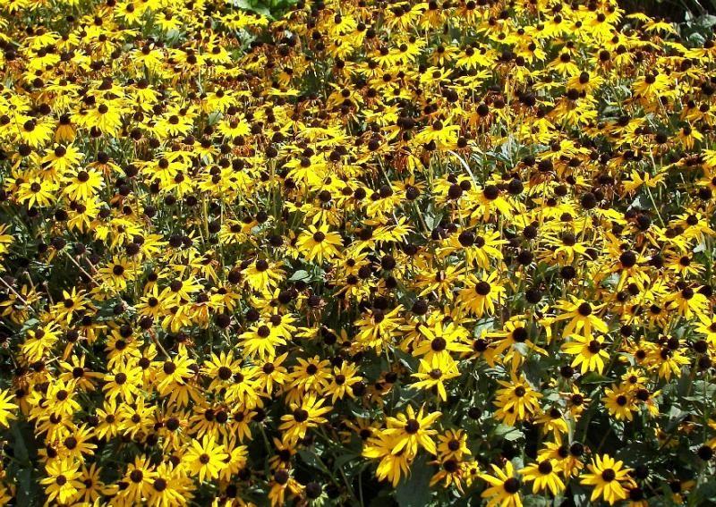 xeriscape texas native plants