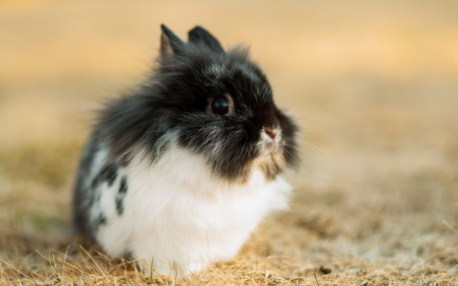 Distractify | 28 Teeniest Tiniest Bunnies Being Adorably Teeny Tiny