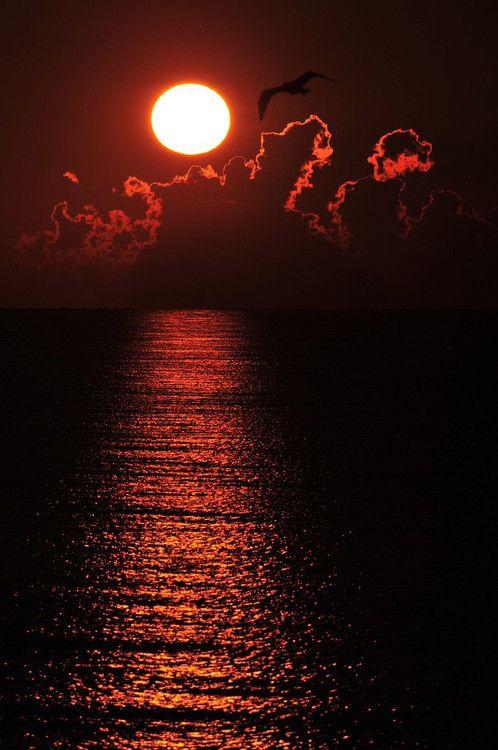 Bonne Nuit Coucher De Soleil : bonne, coucher, soleil, Épinglé