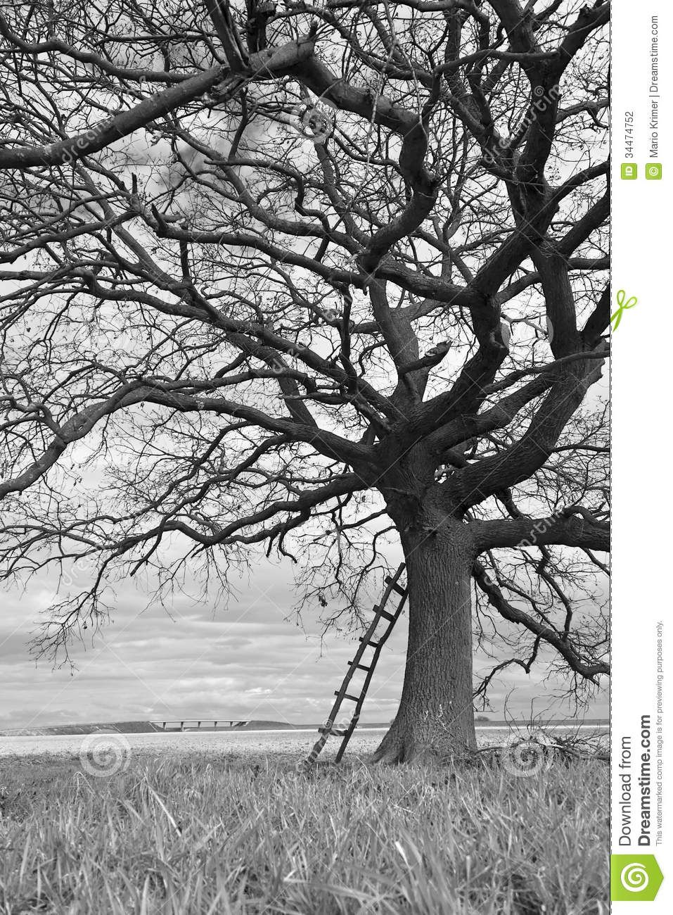 Black and white photography trees hd pictures 4 hd for Black and white tree wallpaper mural
