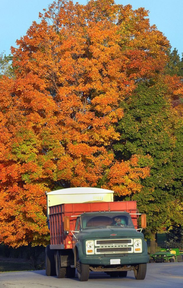 Glorious Fall In This Season Of >> Glorious Fall Colors Predicted In Illinois The Miracle Of Fall