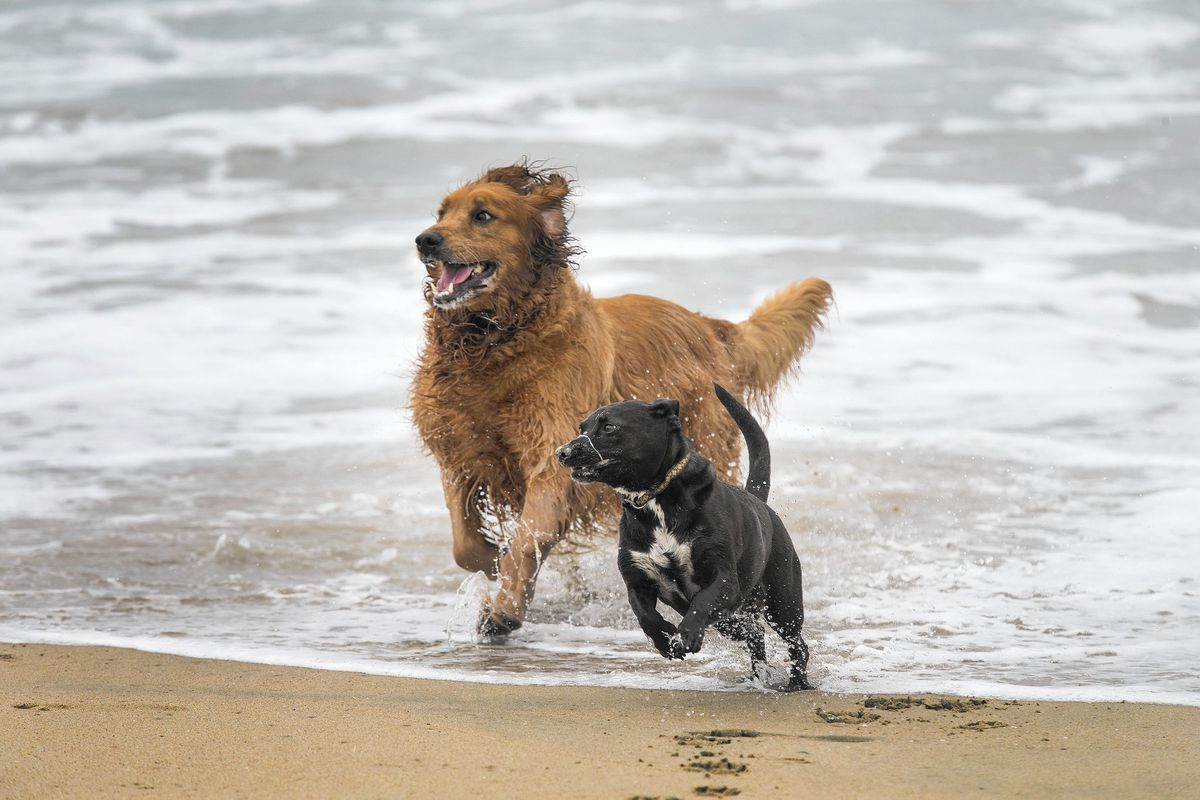 17 Dog Friendly Parks And Beaches In Southern California California Dog Dog Friendly Beach Dog Friends