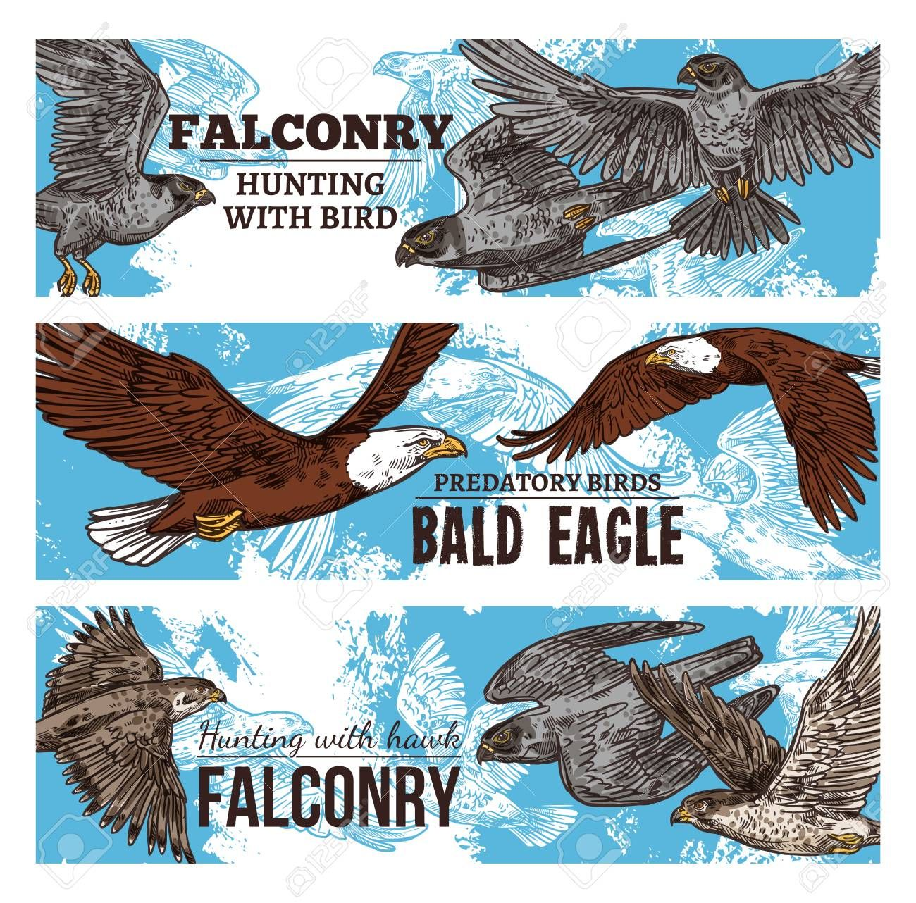 Falconry Hunting With Wild Birds Sketch Banners Vector Eagles Falcons And Predatory Vultures Hawks Bird Of Prey And Bald Ea In 2020 Eagle Hunting Hawk Bird Falconry
