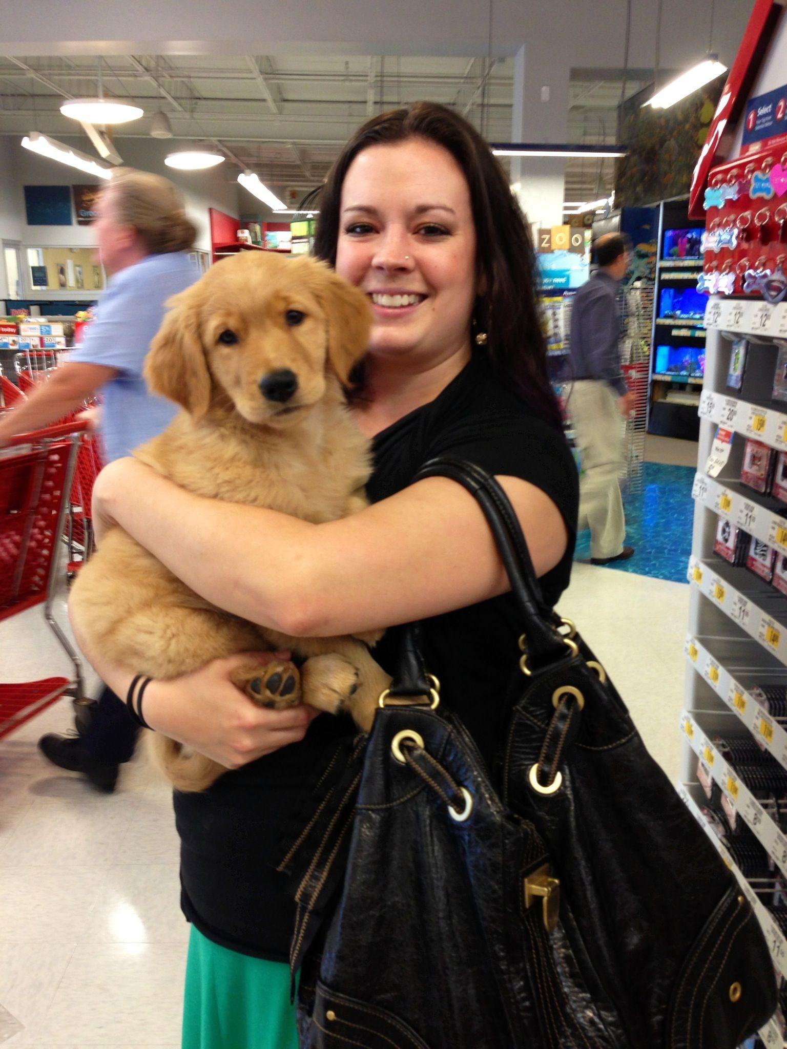 Golden Retriever Puppy Best dog breeds, Golden retriever