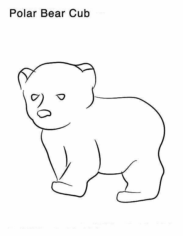 Little Polar Bear Coloring Page Polar Bear Coloring Page Bear