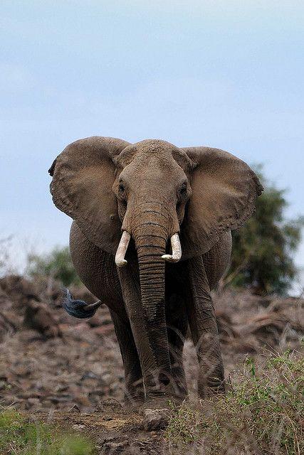 Amboseli National Park . Kenya