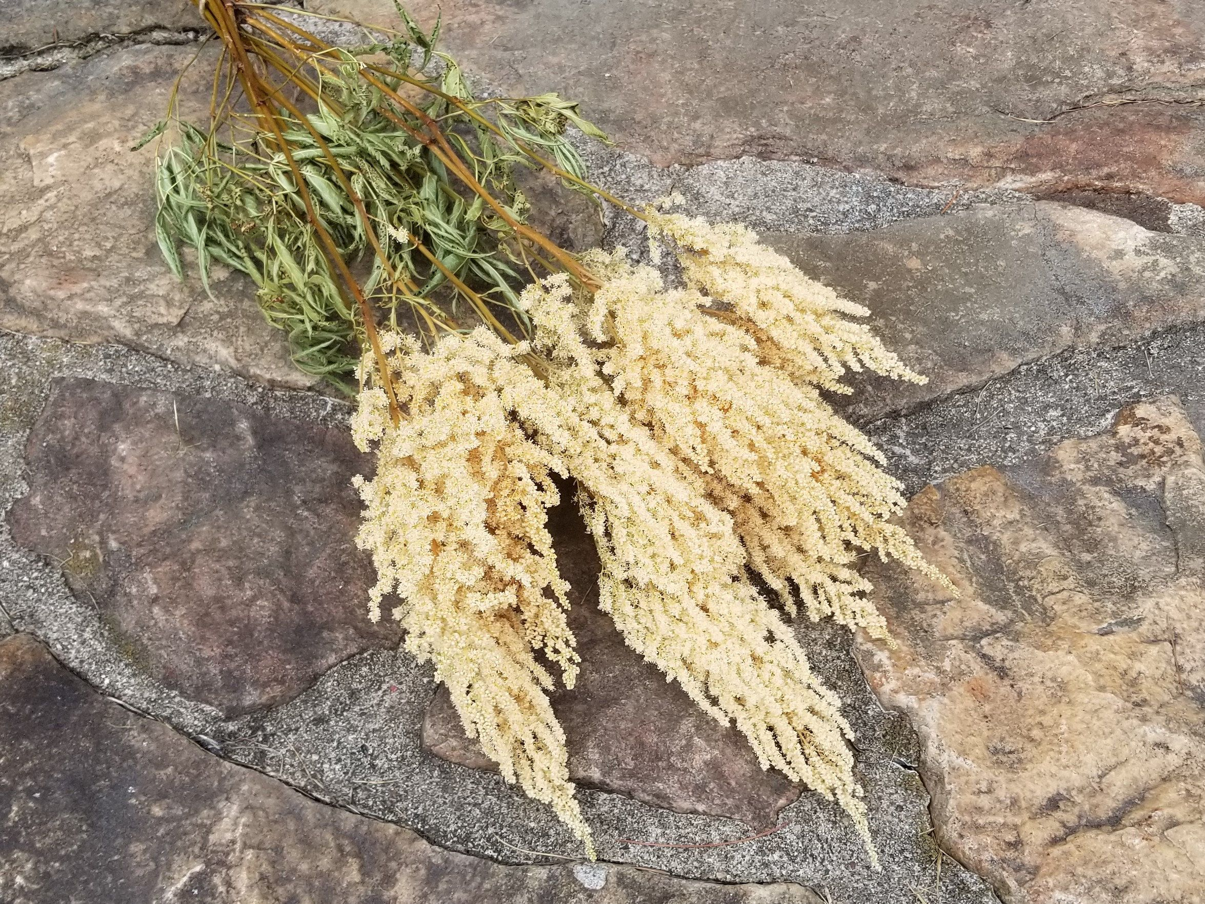 Pin On Dried Flowers And Herbs