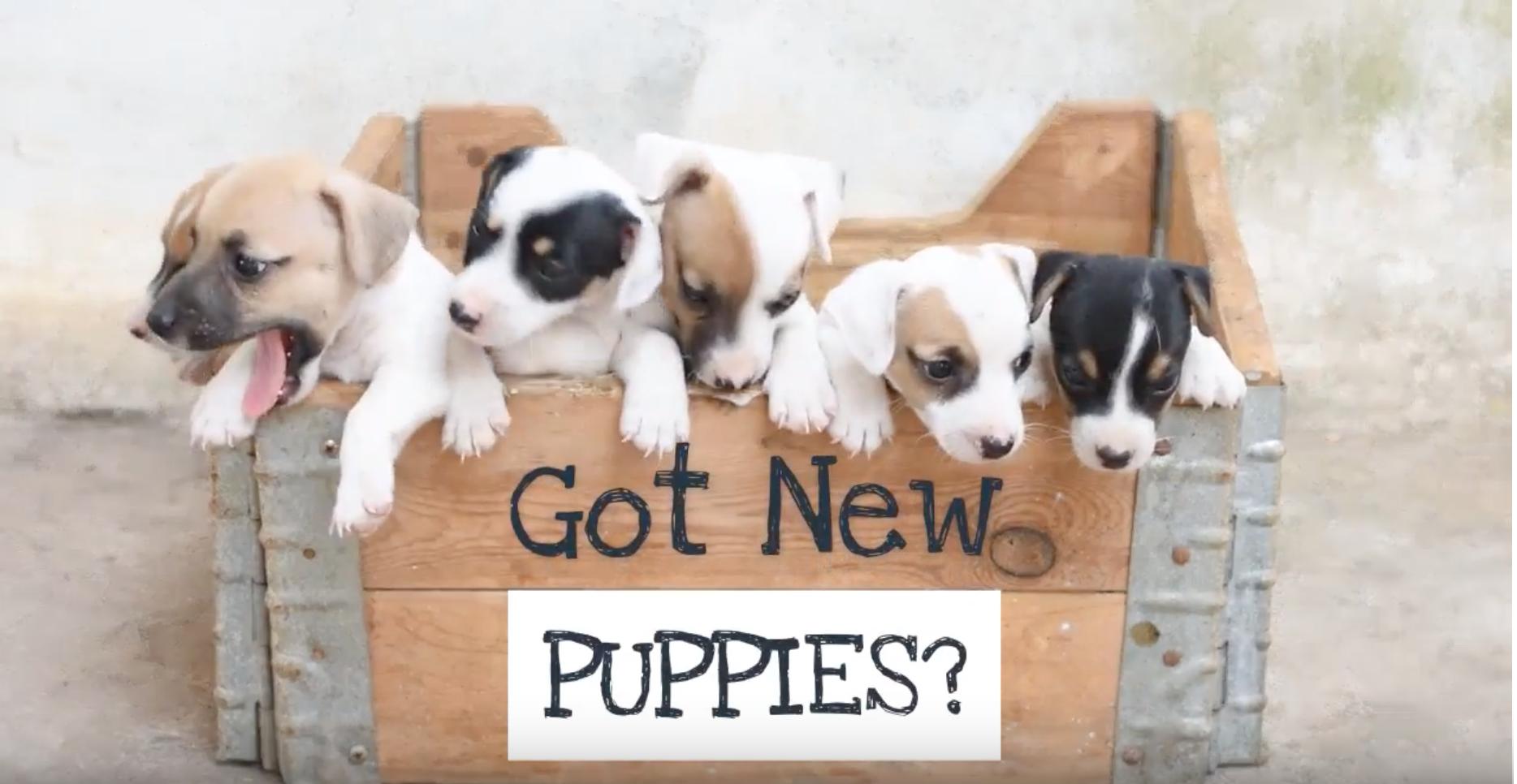 Got puppies? 🐕🐾 You need waterproof flooring 💦quick