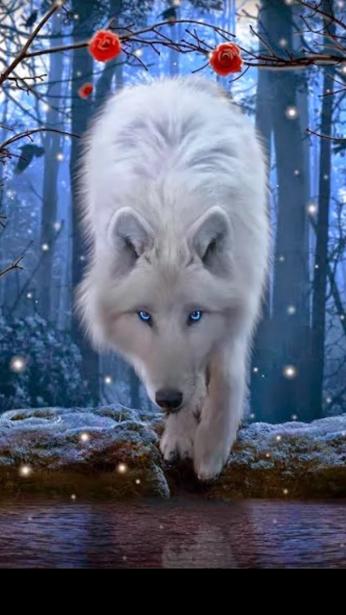 Photo of Majestic white wolf
