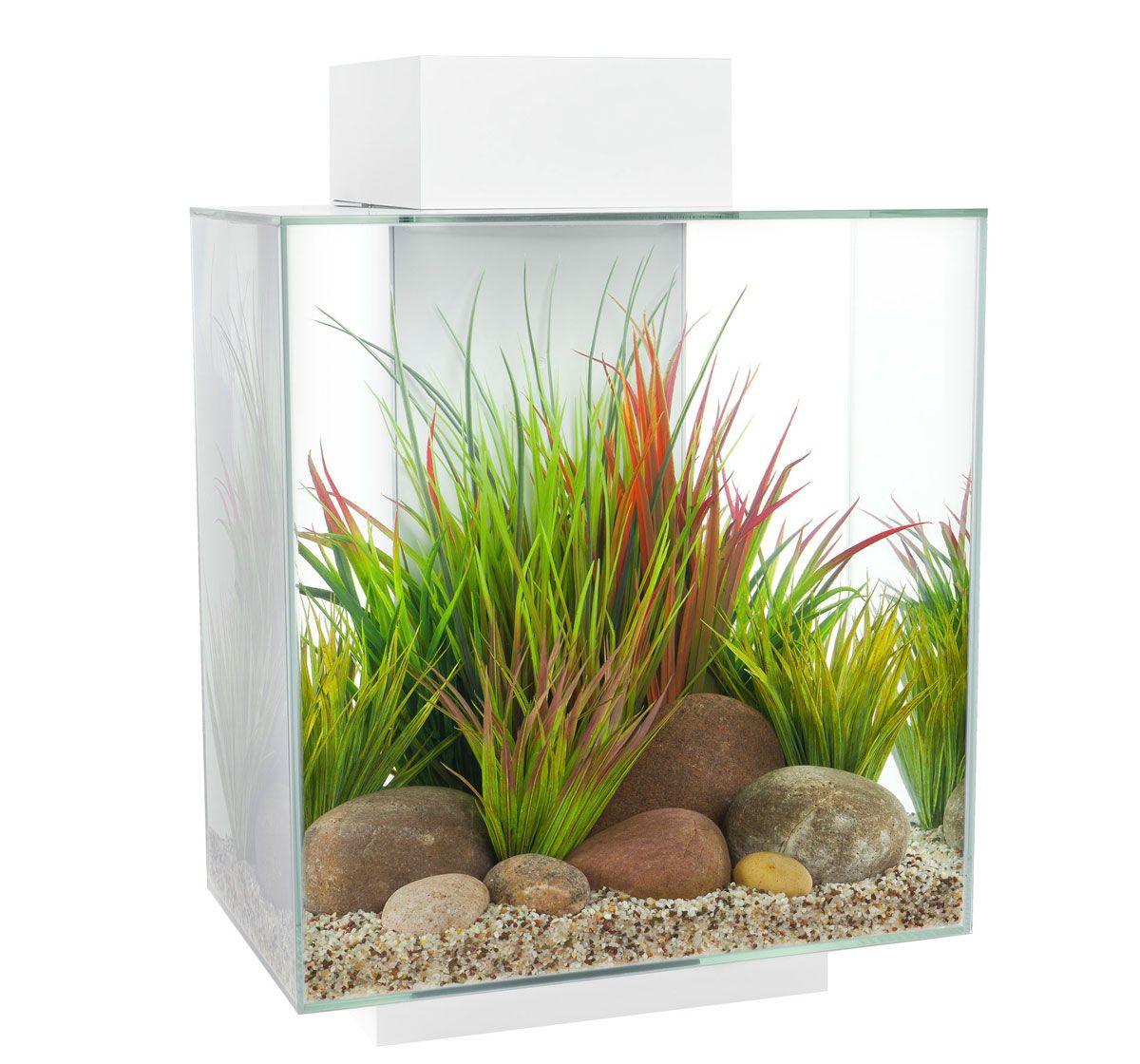 Aquarium fish tank buy online - Buy Aquarium Fish Care Products Accessories And Fish Tank Decorative Items With Best Price At Dogspot Online Shop Find Products To Maintain Aquarium For
