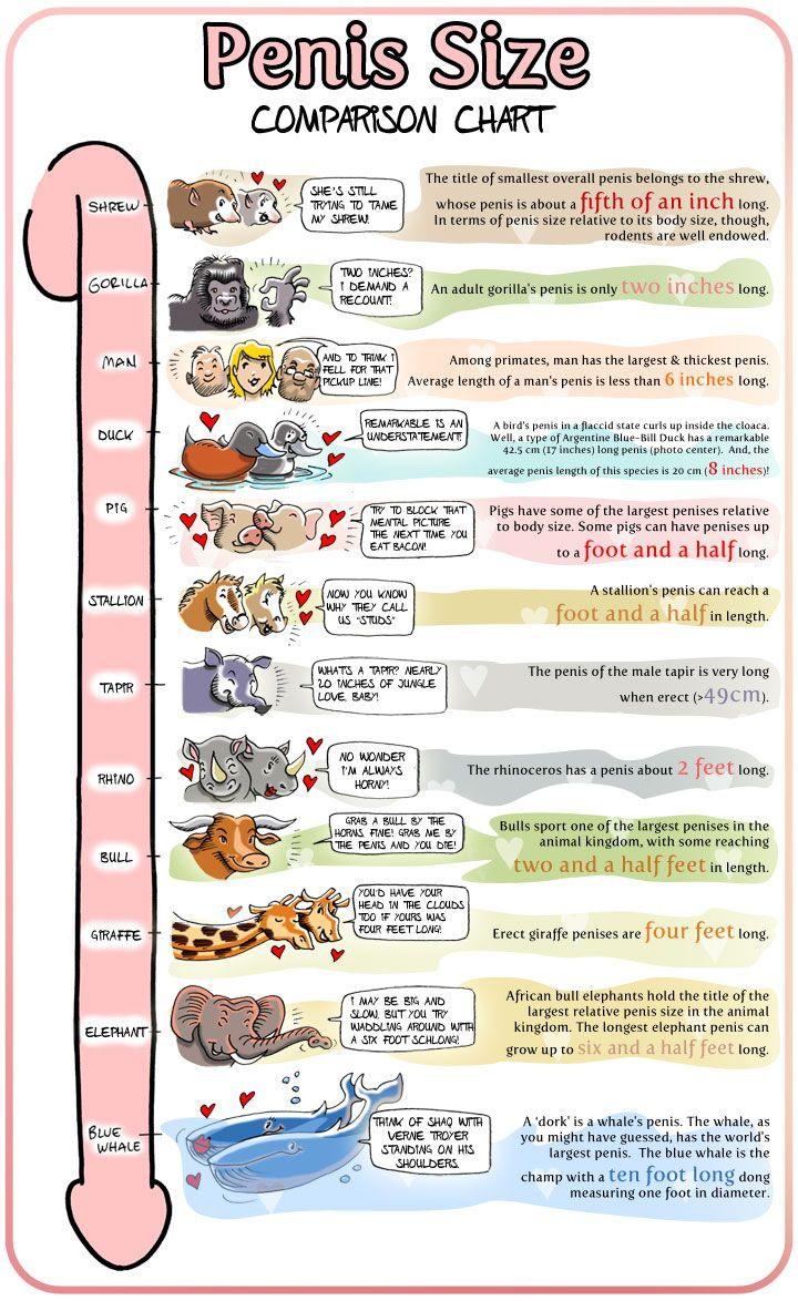 Penis Size Comparison Chart .... :P | Derek | Pinterest | Charts ...
