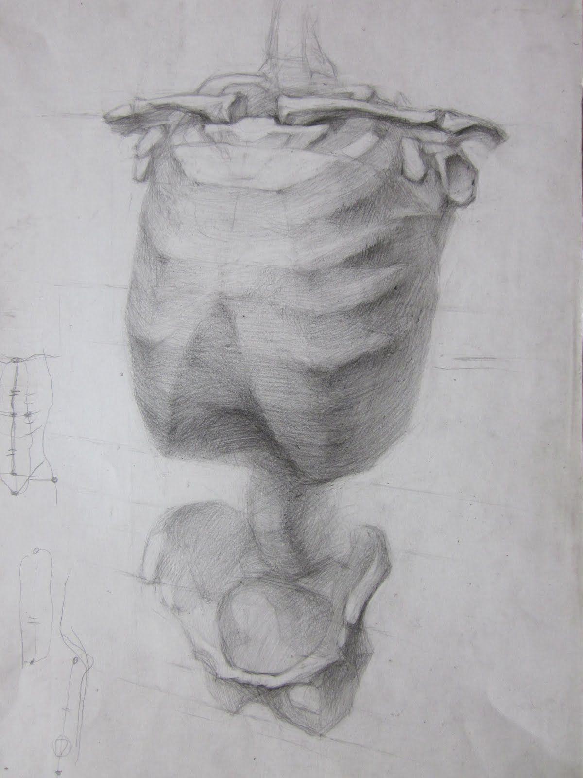 Учебный рисунок: Анатомические рисунки | Анатомия | Pinterest ...