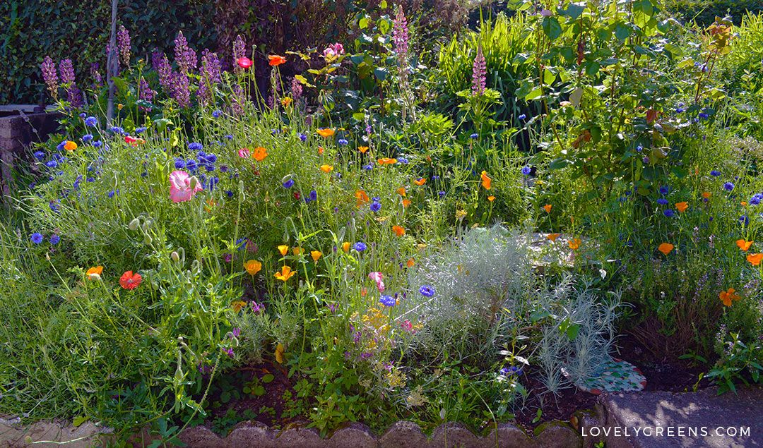How To Grow A Wildflower Cottage Garden Wildflower Garden Cottage Garden Backyard Vegetable Gardens