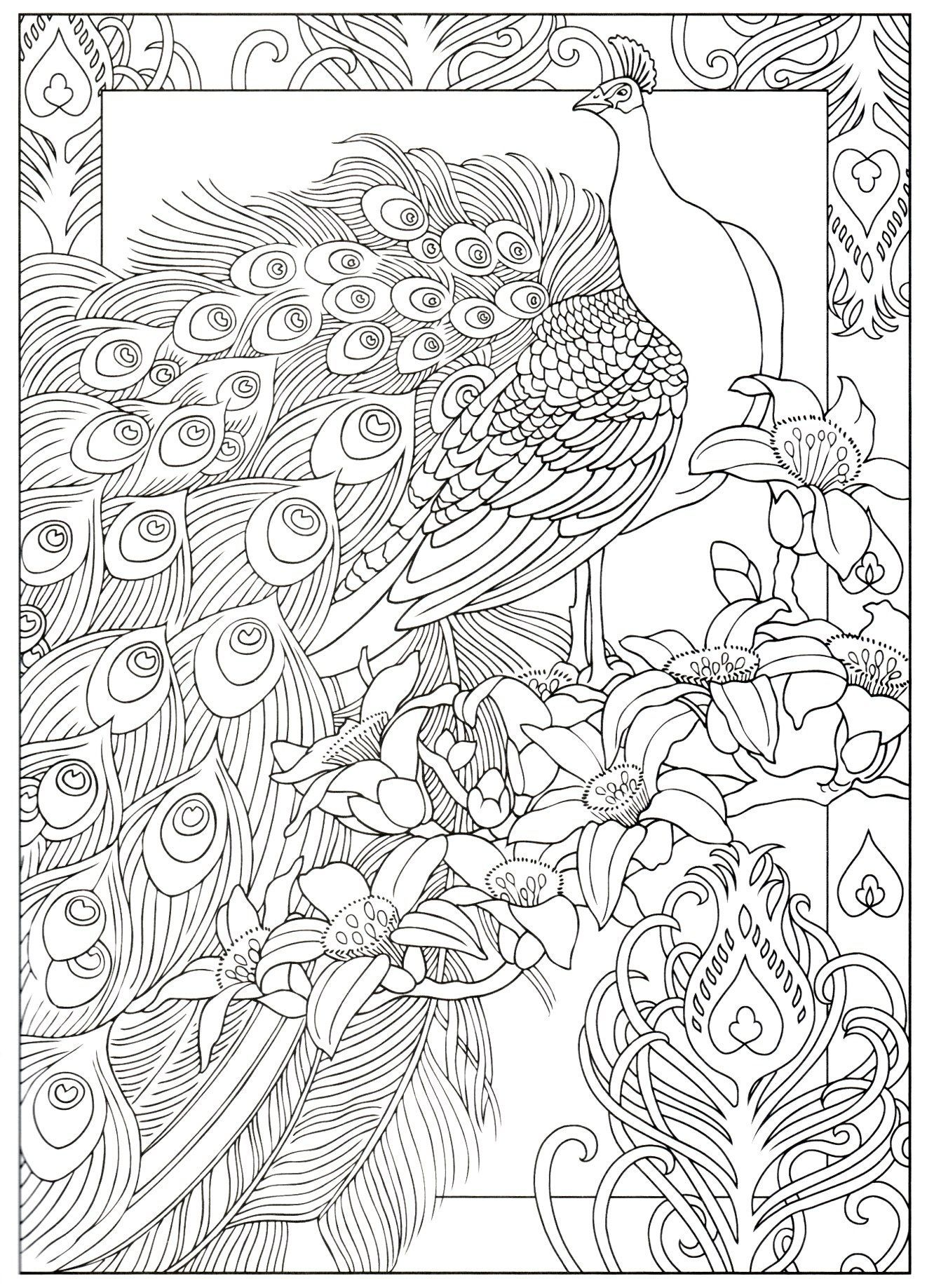 pfauentwürfe des kreativen hafens  coloring pages in 2020