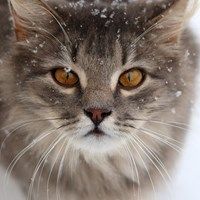 The 25 Days Of Catmas What Is This Cold Stuff I Don T Like It Kittens Cutest Kittens Pretty Cats