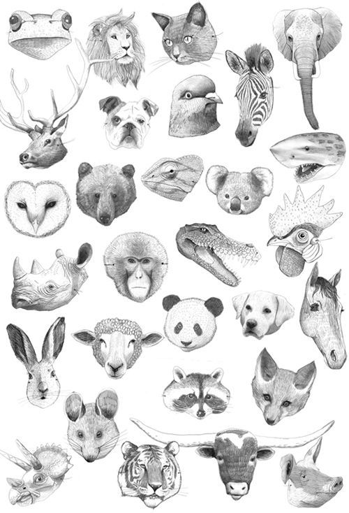 Image Result For Cute Animal Head Drawings Illustrazioni