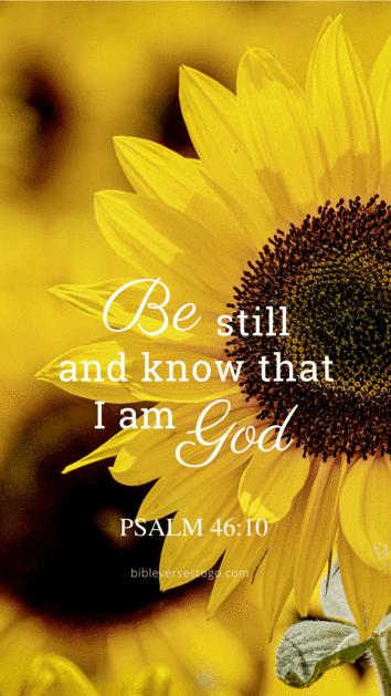 Sunflower Psalm 46:10 | Bible verse wallpaper, Psalms ...