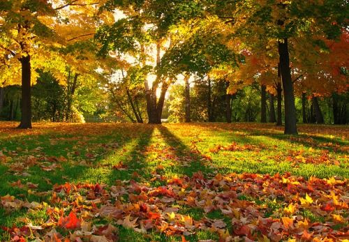 Autumn, Greenfield Park, Milwaukee, Wisconsin photo via cider