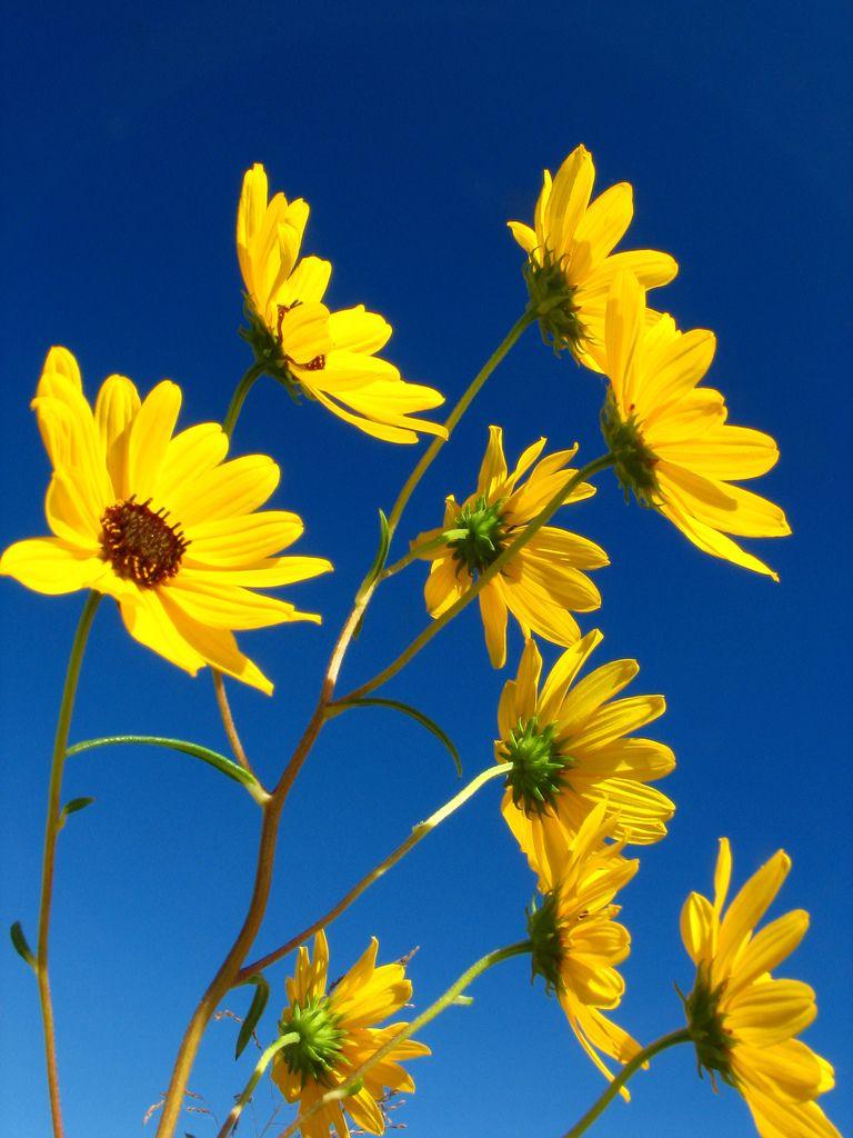 blue yellow autumn yellow aesthetic yellow