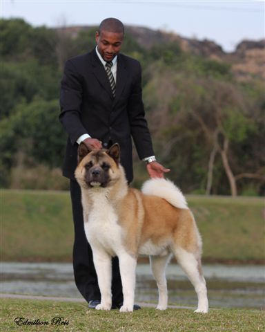 Link To Page Of Reputable American Akita Breeders By Country