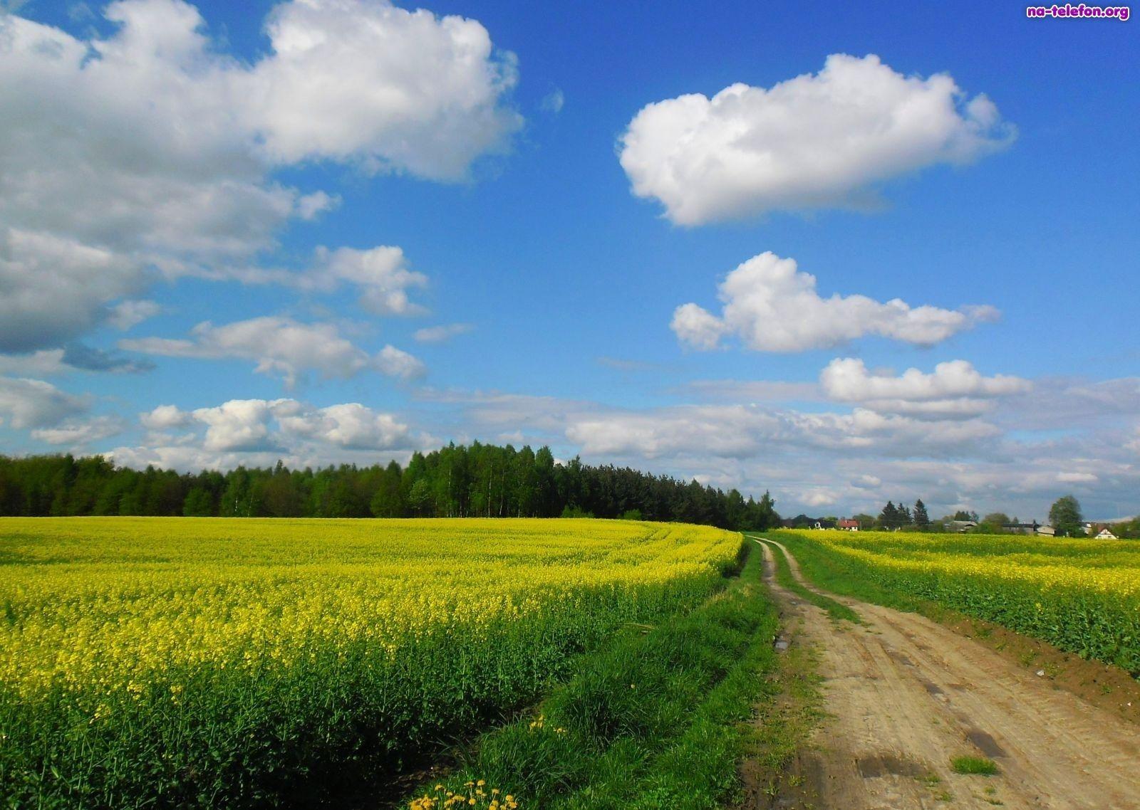 Pole, Droga, Rzepak, Wiosna