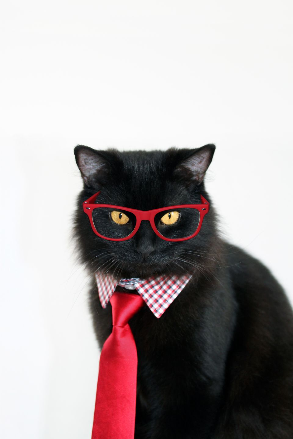 15 Purrfect Halloween Costumes For Your Cat Cute Cat Costumes Cat Costumes Animal Costumes