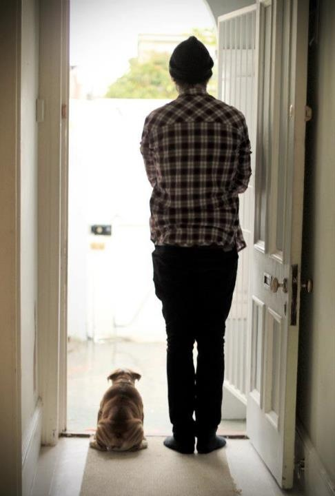 Is mama home??!? Bulldog quotes, Baggy bulldogs, Dogs