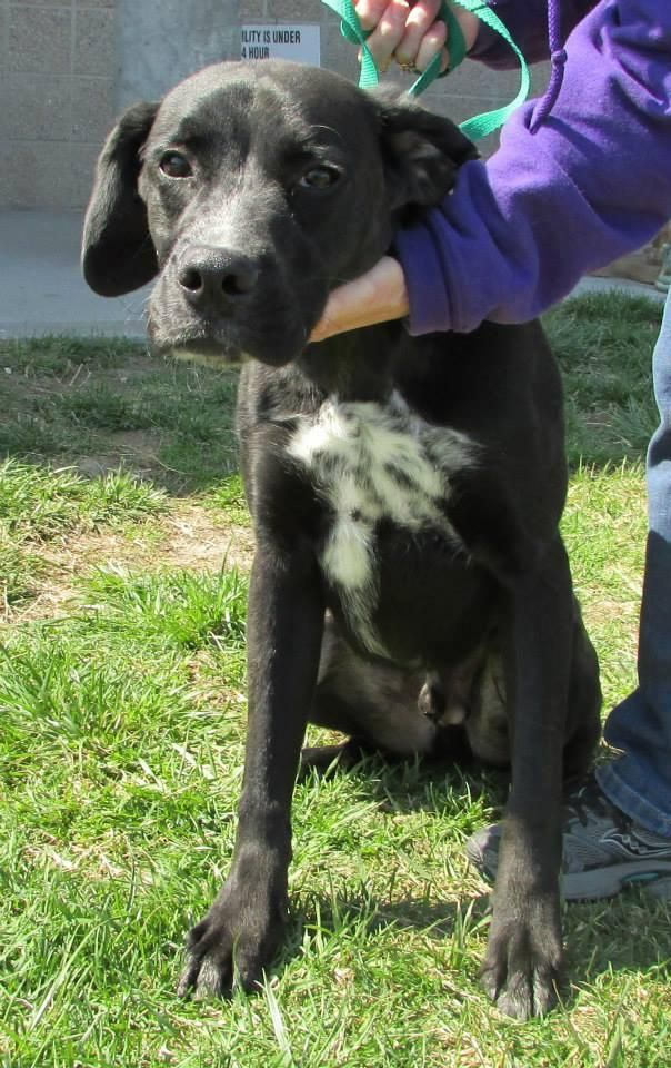 Meet 29524 Starsky Available for Adoption NOW, a Petfinder