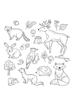 Poster Sketch Waldtiere Wald Cute Baby Tier Waschbar Elch Hase Specht Igel Marder Fuchs Kind Forest Animals Illustration Animal Doodles Baby Animal Drawings