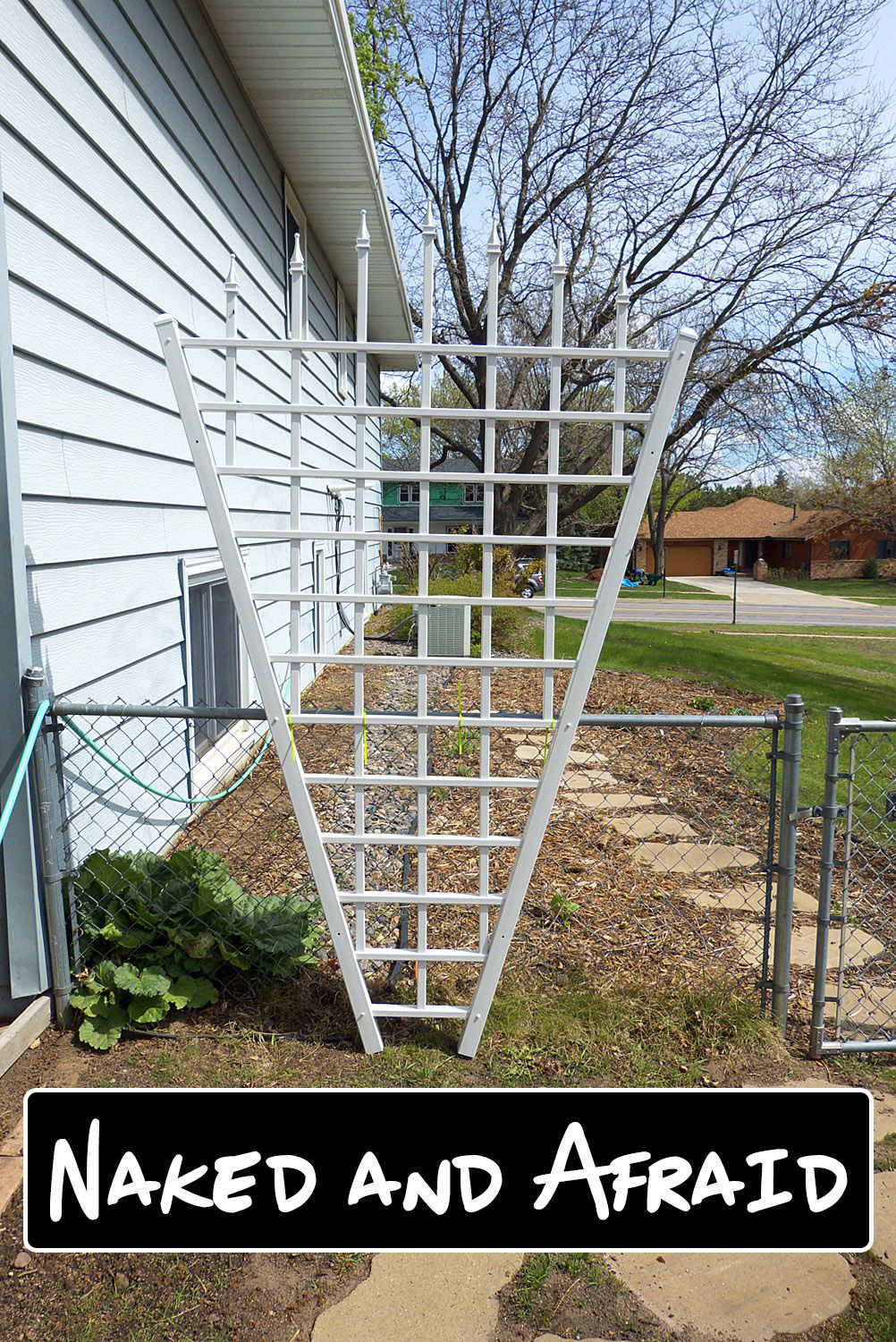 butterfly garden #gardencare Dont leave your Garden Trellis Naked and Afraid- Check out 5 Climbing Plant Ideas that will Cover your Trellis in Vines...and Butterflies!
