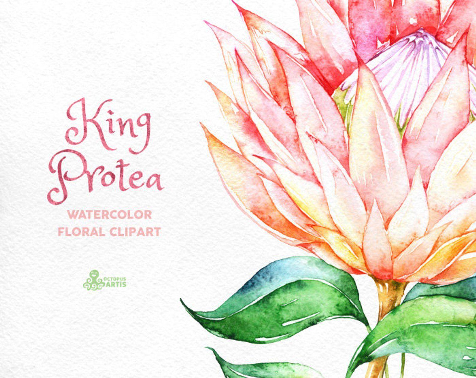 King Protea Watercolor Floral Clipart Wedding Invitation Etsy Floral Watercolor Clip Art Protea Art