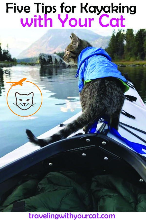 How to Kayak with Your Cat (With images) Adventure cat