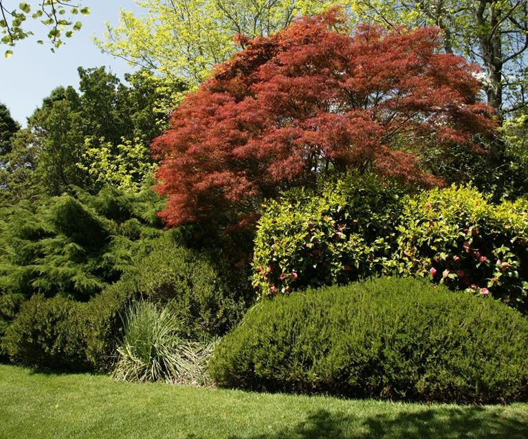 5 fast growing shade trees Australia in 2020   Fast ...