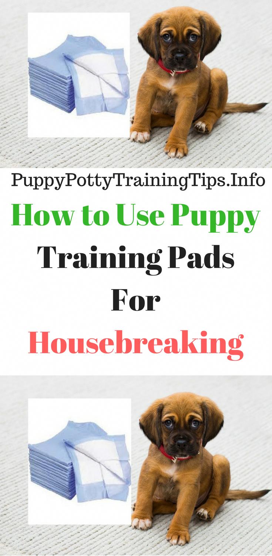 5e8152cac76428184e60b2a02d35827e - How To Get My Puppy To Use Puppy Pads