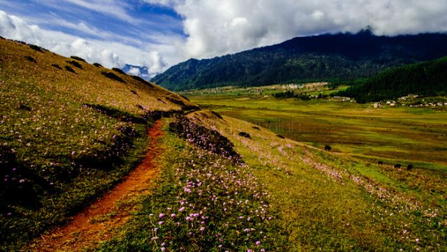 A Beautiful Hiking Trail Called The Gangtey Nature Trail In Phobjikha Bhutan Nature Trail Hiking Trails Travel