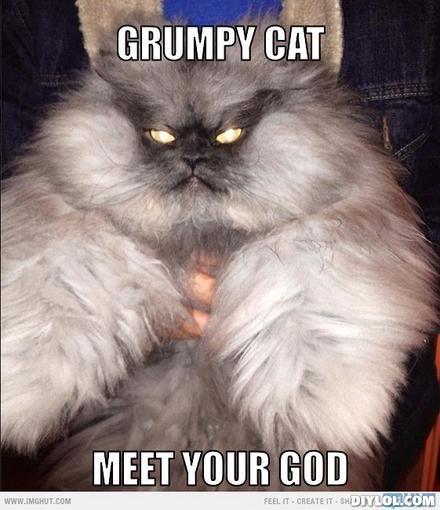 grumpy cat meme | grumpy-cat-meme-generator-grumpy-cat-meet-your ...
