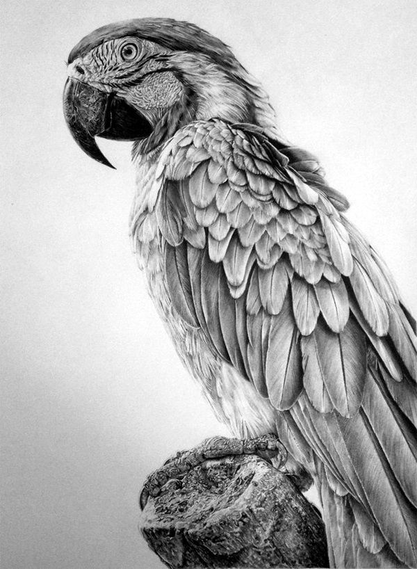 40 realistic animal pencil drawings