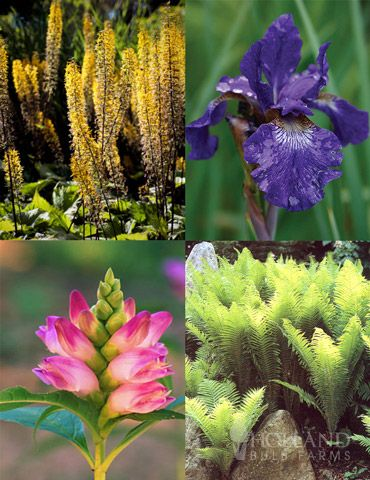 Best Perennials For Wet Soil Best Perennials Plants Perennials
