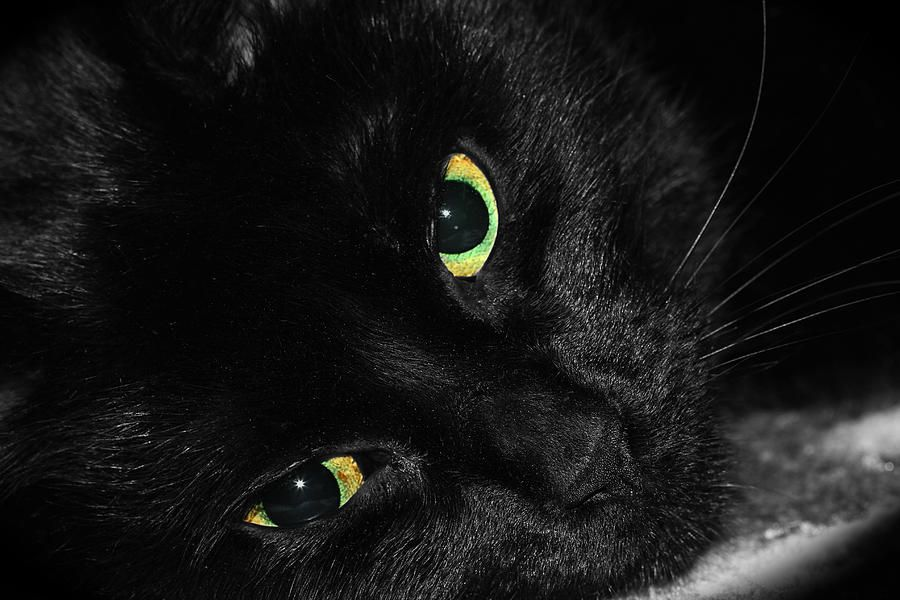 Black Cats With Green Eyes Black Cat With Green Eyes Is A Photograph By Tracie Kaska Which Was Black Cat Cats Black Cat Pictures