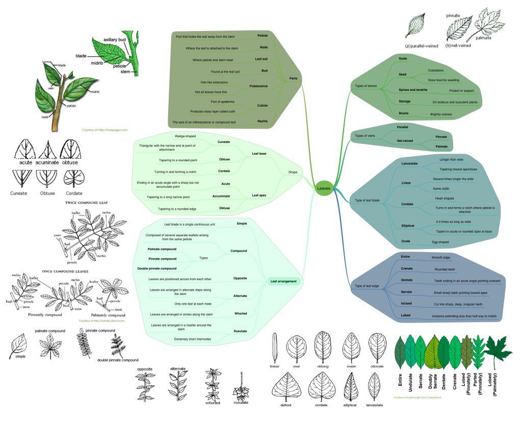 Basic Botany Learn The Lingo