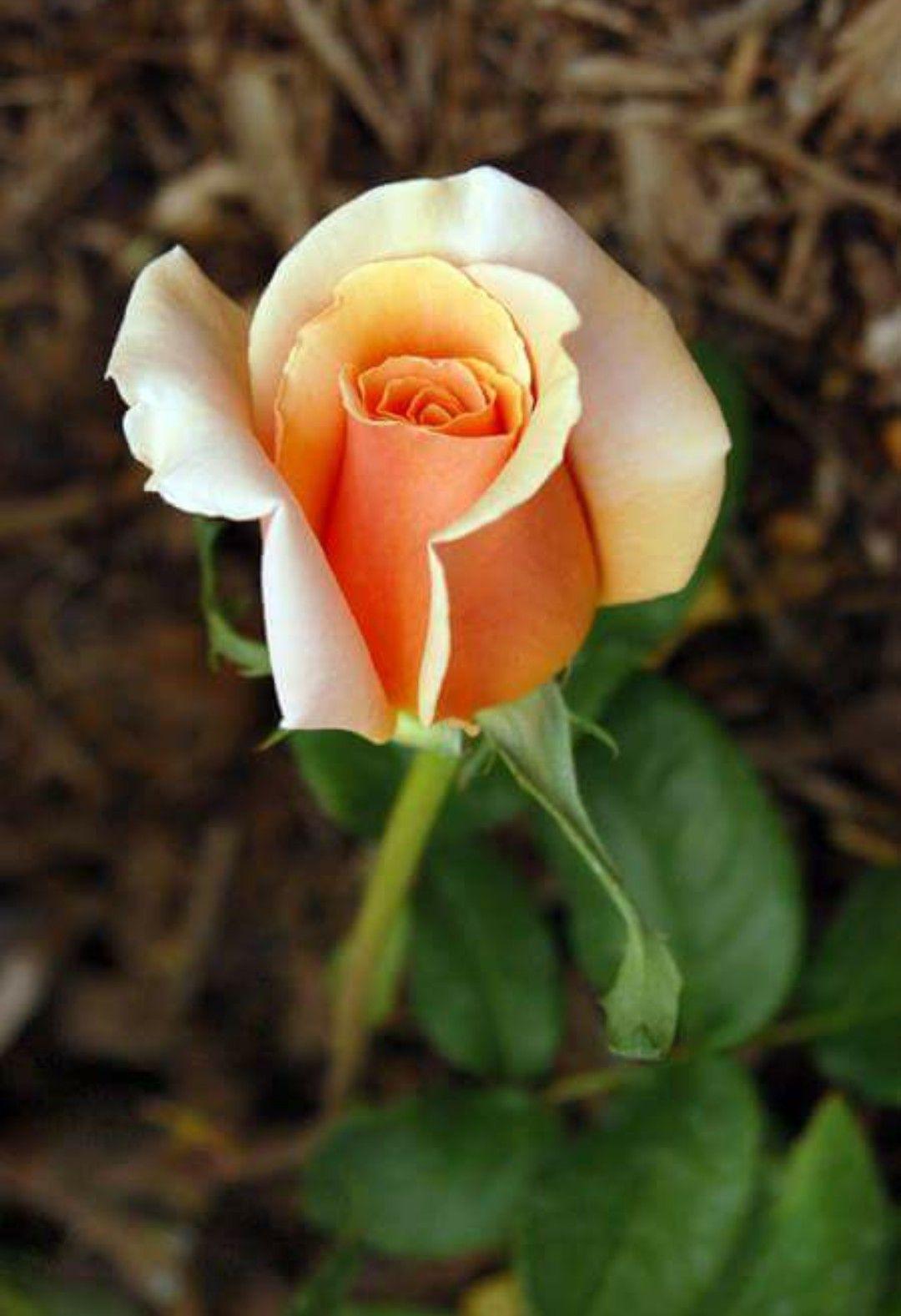 Pin by Cheryl Watkins on Flower Arrangements Beautiful