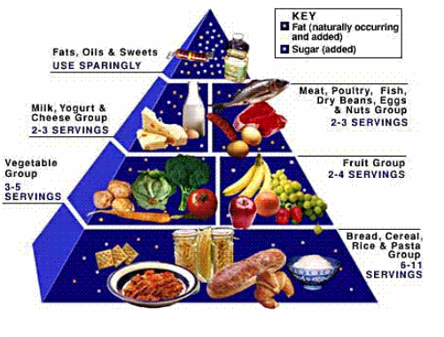 Understanding the new food pyramid.