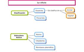 Resultado De Imagen Para Organelos Celulares Para Colorear