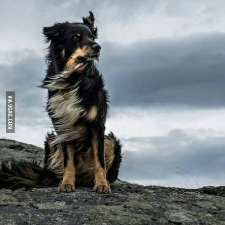 From 1 to 10 tell me how Majestic my dog is (I paid a photographer to take the picture)