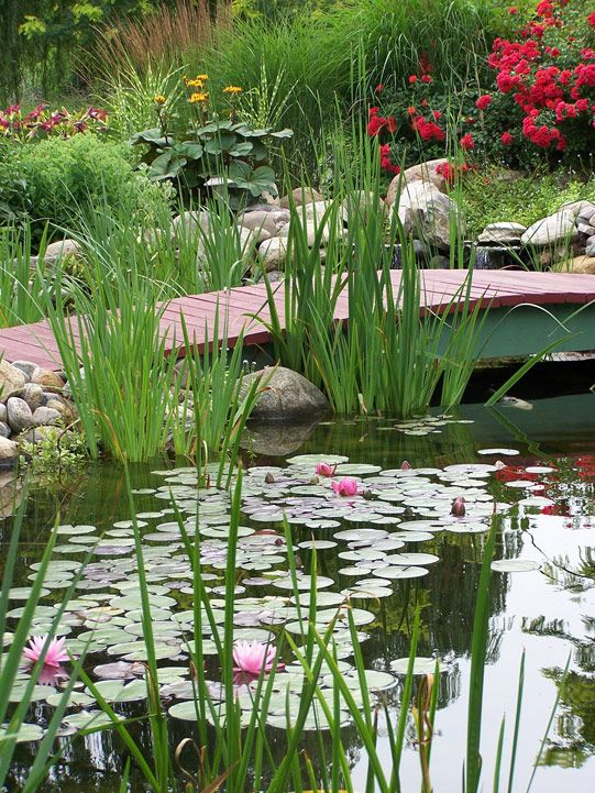 The Sperling's Pond, Hamilton, Ontario... I love the simple bridge, the surrounding planting and the water lilies.