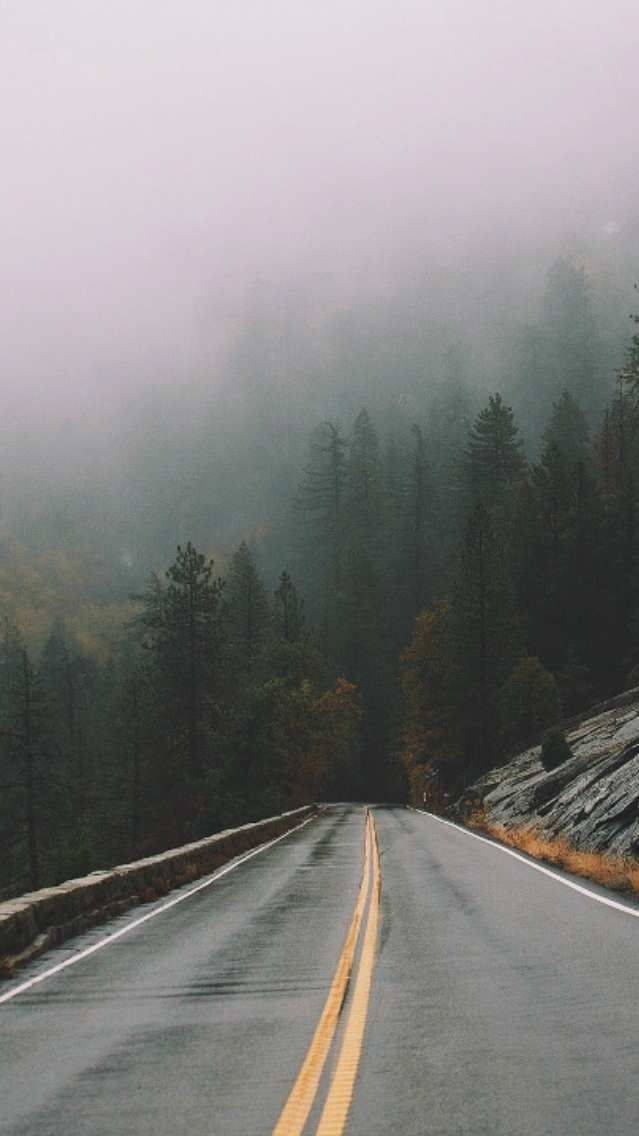 Rain Mist Fog Forest Road Wallpaper Backgrounds Phone Wallpapers
