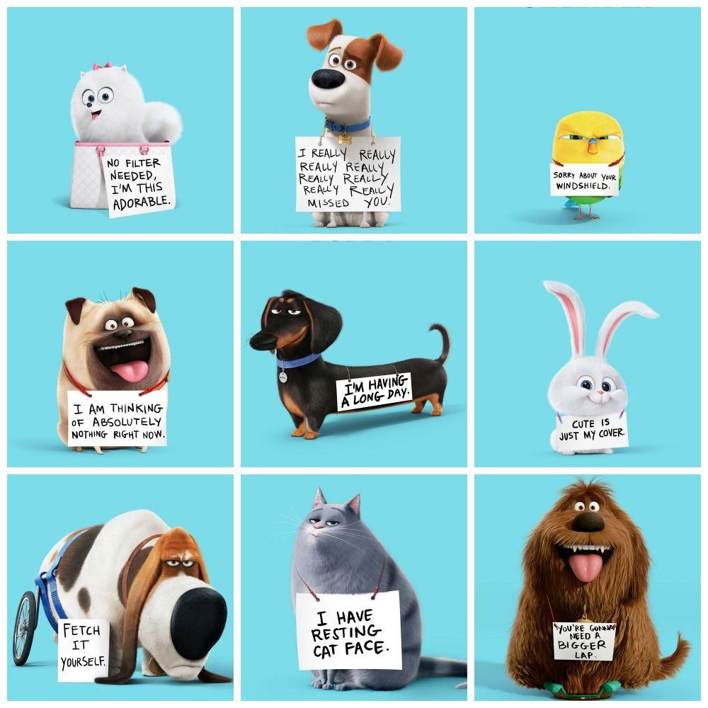 Pets On Secret Life Of Pets Jpg 1000 1000 La Vida Secreta De