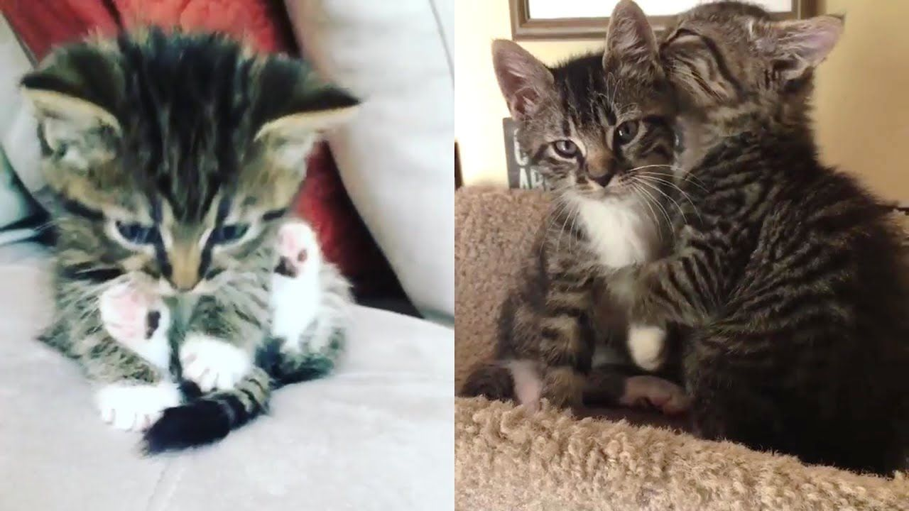 Rescue Two Sibling Little Kittens Because They Lost Their Mom Become Ado Little Kittens Kittens Foster Kittens