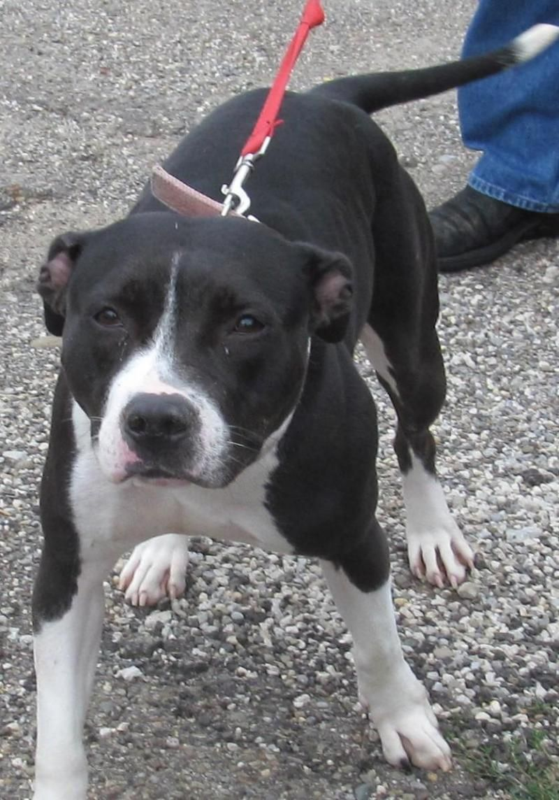 TAYLOR (sweetheart) FOUND IN STARK COUNTY OHIO....NOW