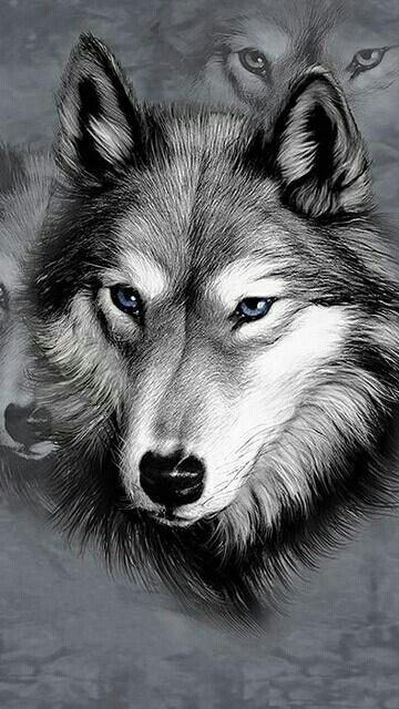 Pin By Morgan Kysar On Beautiful Images In 2018 Loup Loup Dessin